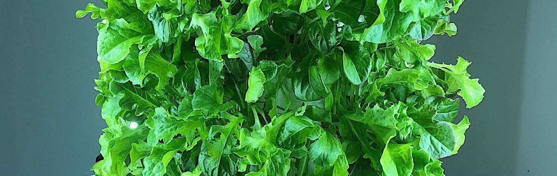 Old Market Greens